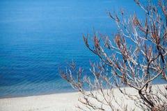 Bush en la playa cerca del agua imagenes de archivo