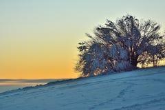 Bush en la puesta del sol en Kozakov Fotos de archivo libres de regalías