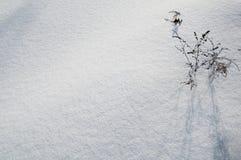 Bush en nieve imagenes de archivo