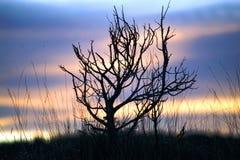 Bush en puesta del sol imágenes de archivo libres de regalías