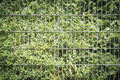 Bush with fence Stock Photography
