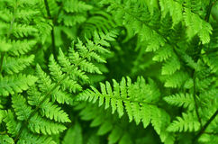 Bush of fern Stock Photos