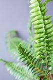 Bush of the fern plant Stock Photo