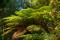 Bush Ferns Stock Photos