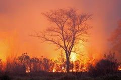 Bush-Feuer Lizenzfreie Stockfotos