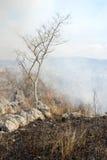 Bush-Feuer Stockbilder