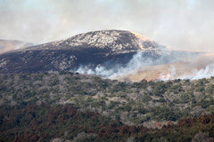 Bush-Feuer Lizenzfreies Stockbild