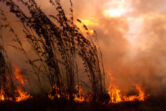 Bush-Feuer-Sonnenuntergang Lizenzfreie Stockbilder