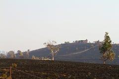 Bush-Feuer Tasmanien 2013 Stockbild