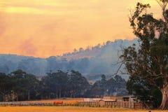 Bush-Feuer Tasmanien Stockbild