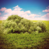 Bush in the Fields Royalty Free Stock Photo