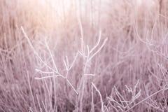Bush filialer som täckas av rimfrost Arkivfoto