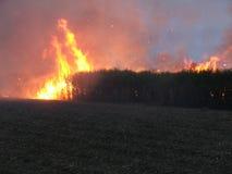 Bush Fire. Australian sugar cane fire Stock Image