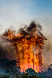 Bush fire Royalty Free Stock Image