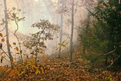 Bush fire 3. A lot of smoke from these dry leaves burning quickly in the bush in the Ozark Mountains stock photo