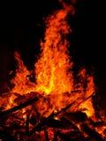 Bush fire. Large fire Royalty Free Stock Photo
