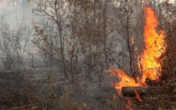 Bush Fire Royalty Free Stock Photos