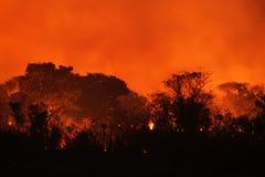 Bush Fire Stock Photos