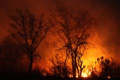 Bush Fire Royalty Free Stock Photos