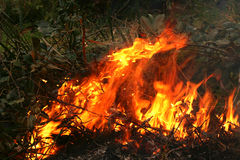 Bush fire in Australia. Image shows a small hazard reduction burn carried out to manage bush fires in NSW Australia Royalty Free Stock Photos