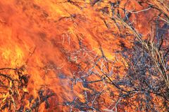 Bush fire Background - Colorful Flames of Heat and Danger Stock Image