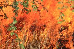 Bush fire Background - Colors of Heat and Danger Stock Photo
