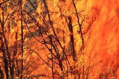 Bush fire Background - Incineration with Color Royalty Free Stock Photos