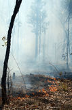 Bush Fire Stock Image