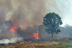 Bush Fire Royalty Free Stock Image