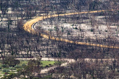 Bush Fire Damage. Burnt forest in the Grampians, Australia, due to a bush fire Royalty Free Stock Photo