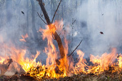 Bush fire destroy tropical forest. In Thailand royalty free stock image