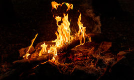 Bush fire place with flames Royalty Free Stock Image