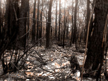 Bush Fire Scene. About 5 mins away by foot from my house there was a big fire in some bushland, this is the aftermath Stock Photo