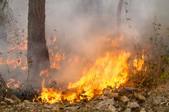 Bush fire in tropical forest Royalty Free Stock Image