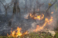 Bush fire in tropical forest Royalty Free Stock Images