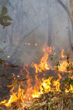 Bush fire in tropical forest Royalty Free Stock Photo