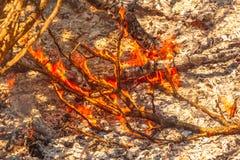 Bush in flames stock image