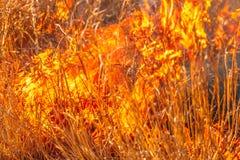 Bush in flames stock photo