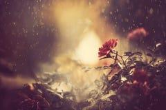 Bush flower Stock Photography