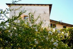 Bush with flowers in the garden of the castle in the village of Strassoldo Friuli (Italy) Royalty Free Stock Images
