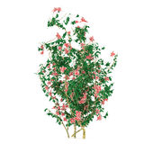 Bush with flowers isolated vector illustration