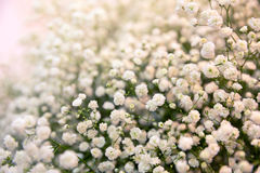 Bush with flowers Royalty Free Stock Photo