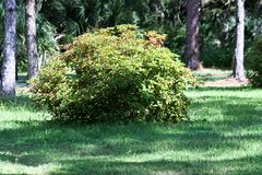 Bush in the forest. stock photos