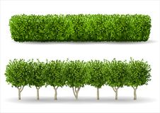 Bush in the form of a green hedge. Ornamental plant. The garden or the Park. Set of fences. Vector graphics vector illustration