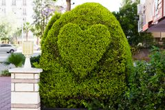Bush in the form of heart Stock Images