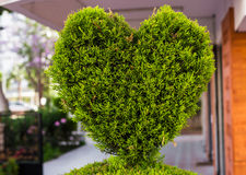 Bush in the form of heart Royalty Free Stock Photo