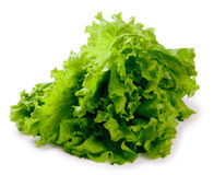 Bush of fresh leaves of green salad isolated Royalty Free Stock Photo