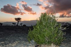 Bush in front of a sunset. Bush growing in the mountains with sunset in the back Stock Image