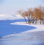 Bush in the frozen river. The bush is in the frozen river,shoot in hebei bashang Stock Image