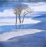 Bush in the frozen river Stock Photos